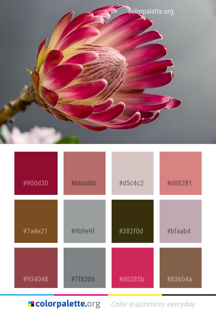 Flower Pink Plant Color Palette Colors Inspiration Graphics Design Inspiration Beautiful C Pink Color Combination Color Palette Color Combinations Paint