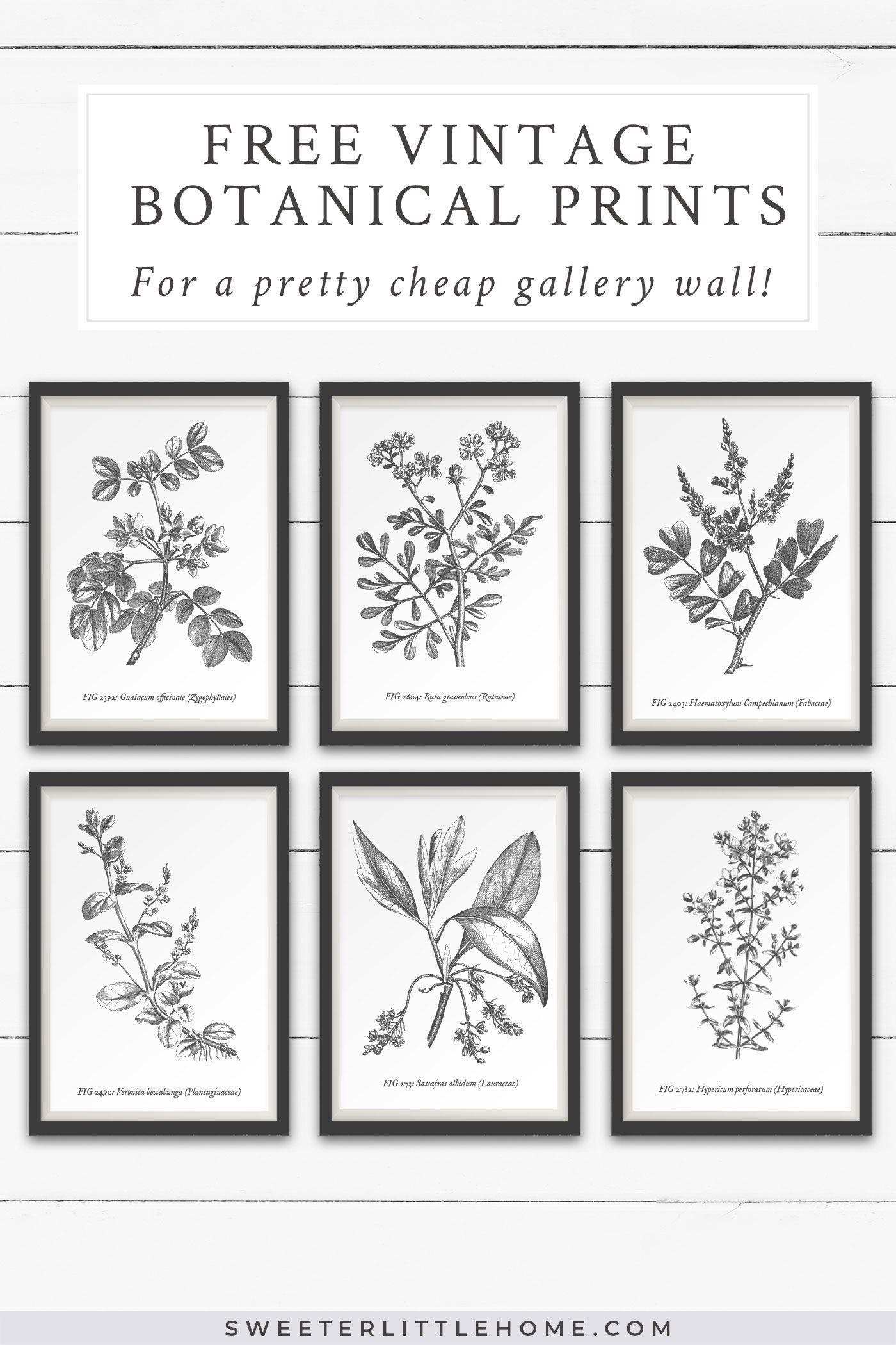 Free Vintage Botanical Prints Wall Art Free Printable Wall Art Botanical Wall Art Vintage Botanical Prints