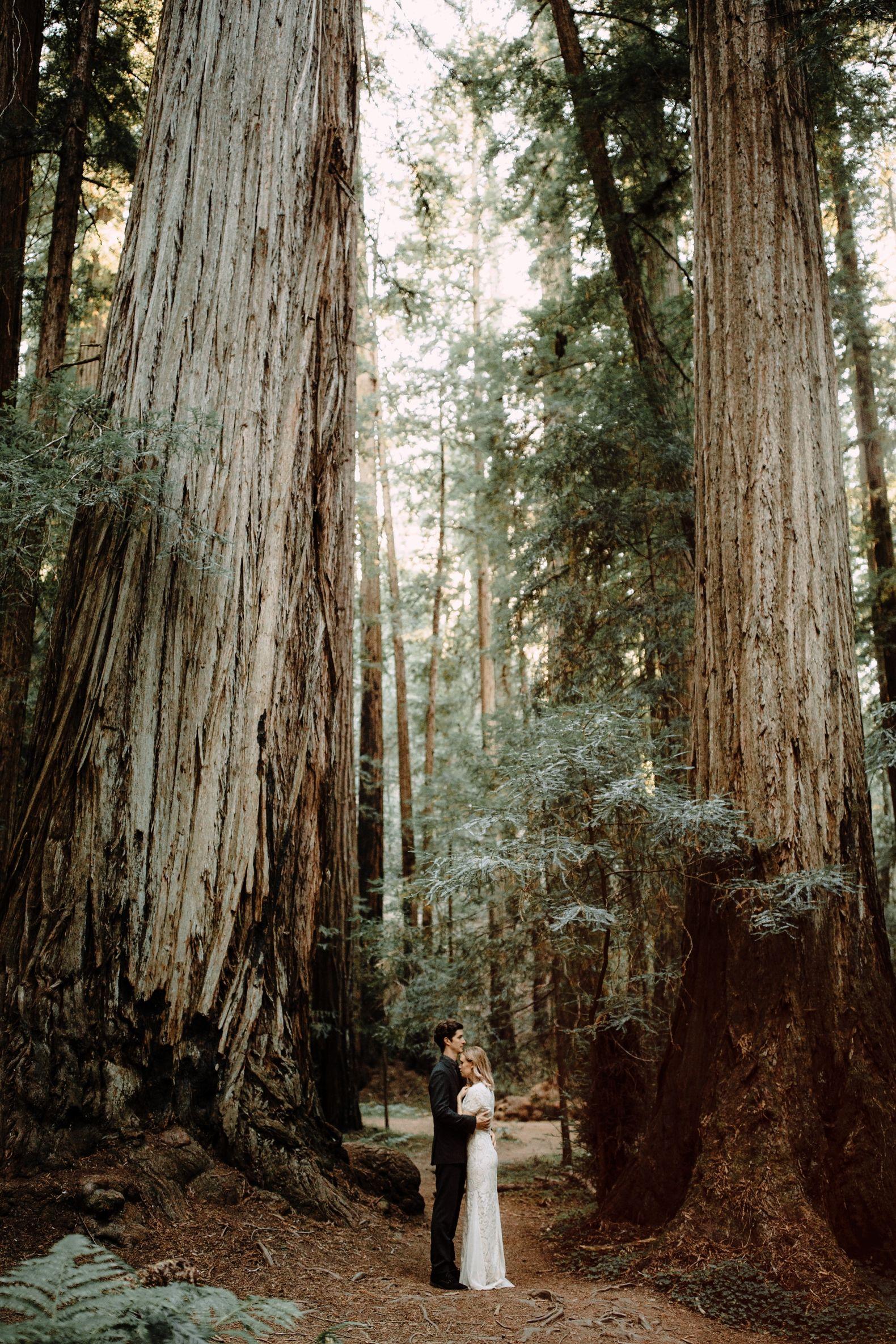Elopement ideas redwood forest elopement california