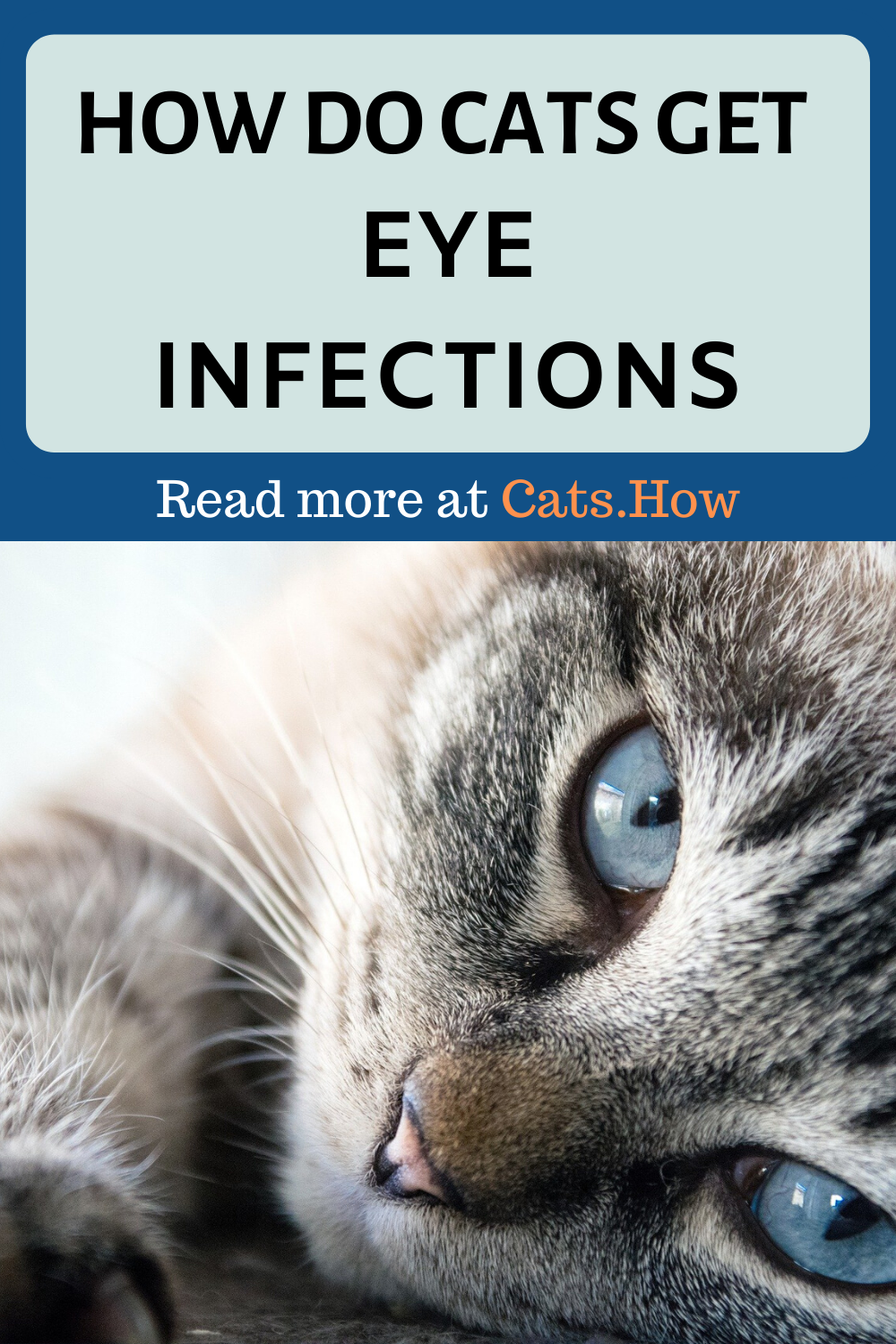 How Do Cats Get Eye Infections In 2020 Eye Infections Kitten Eye Infection Cat Eye Infection