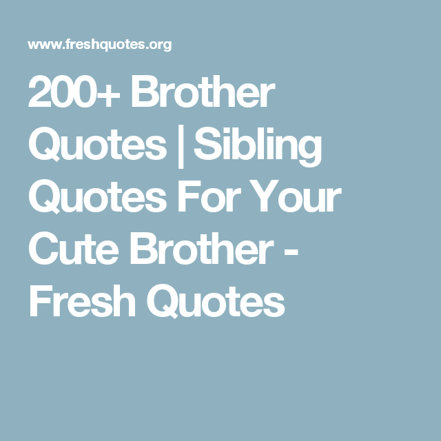 Sibling Quotes 200 Brother Quotes  Sibling Quotes For Your Cute Brother  Fresh
