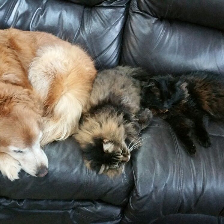 Amber, Thor & Troy taking over the couch
