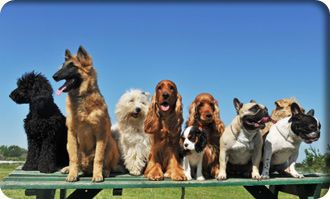 Good Dog Walking Group Dog Walks Dog Breed Selector Dogs Purebred Dogs