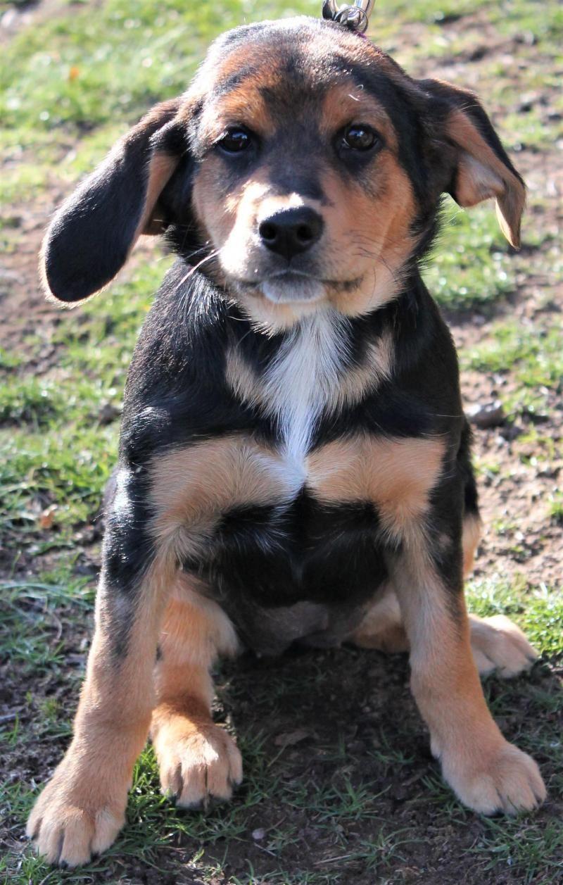 Adopt Jane on Adoptable beagle, Beagle, Beagle dog