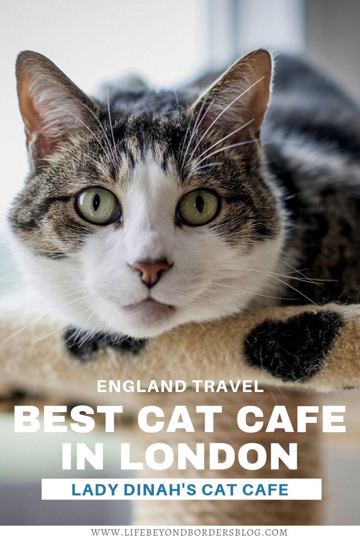 Lady Dinah's Cat Cafe London Cat cafe, Cats, London