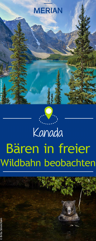 Bären beobachten in Kanada | canada | Kanada, Westkanada ...