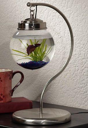 Betta Art Decorative Fish Bowl On The Ball Make A Terrarium  Fish Bowls And Decorative Accessories