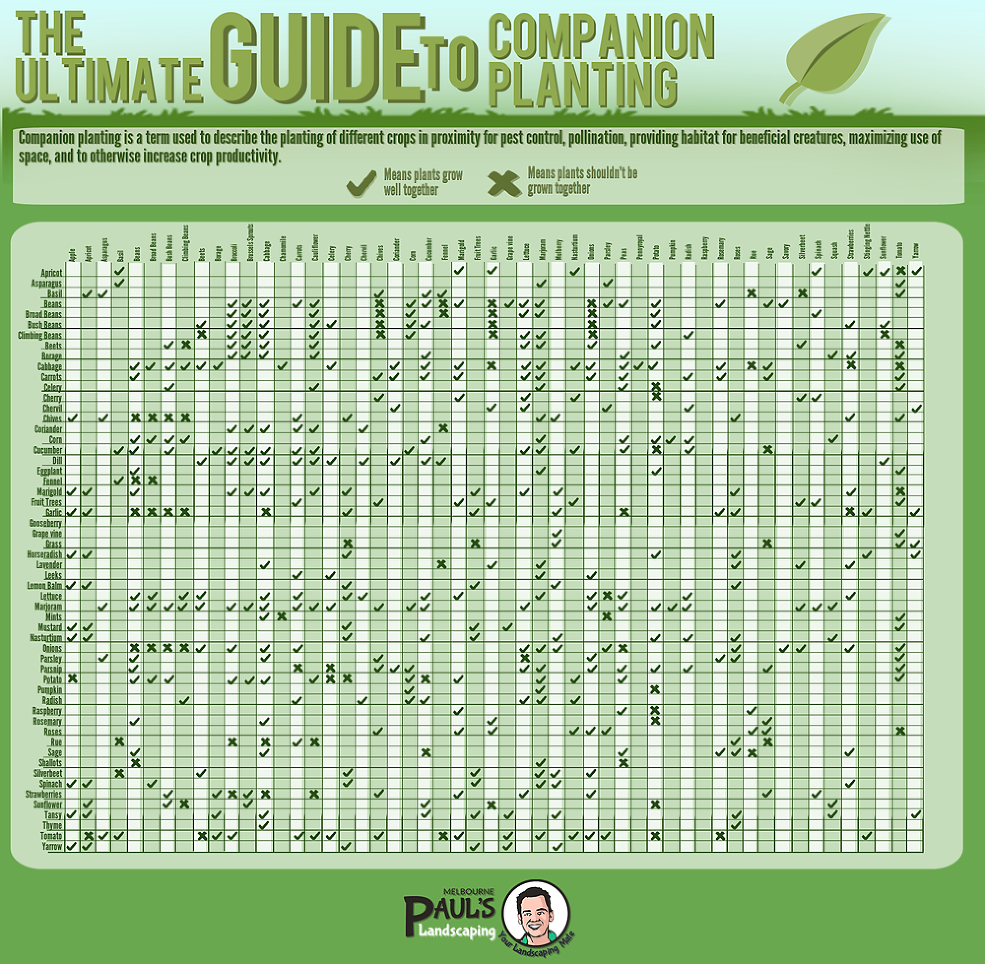 Planting - a Graphic Guide Companion Planting - a Graphic GuideCompanion Planting - a Graphic Guide
