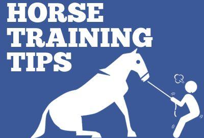 Get horse training tips, horse training exercises, and horse training ground work at CarsonJames.com