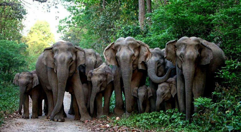 Bandipur National Park Tour Package Karnataka India