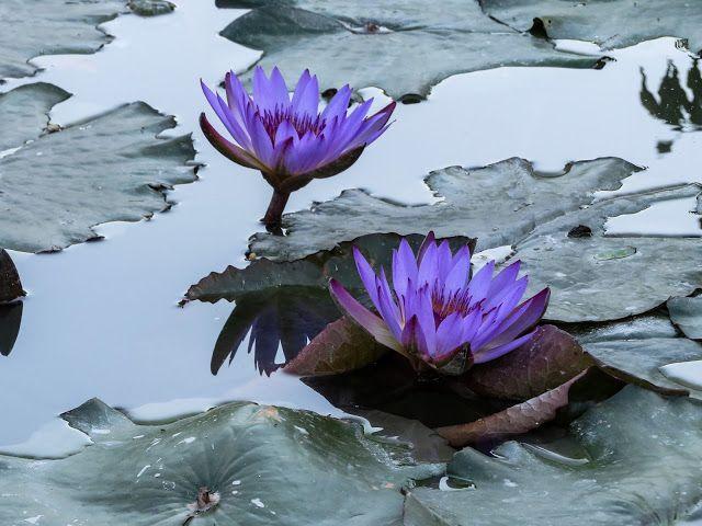 Atrapados por la imagen: Imitando a Monet