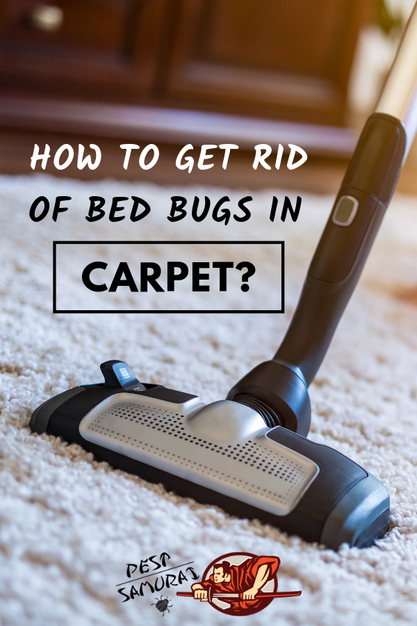 How to Get Rid of Bed Bugs in a Carpet Easy Instructions