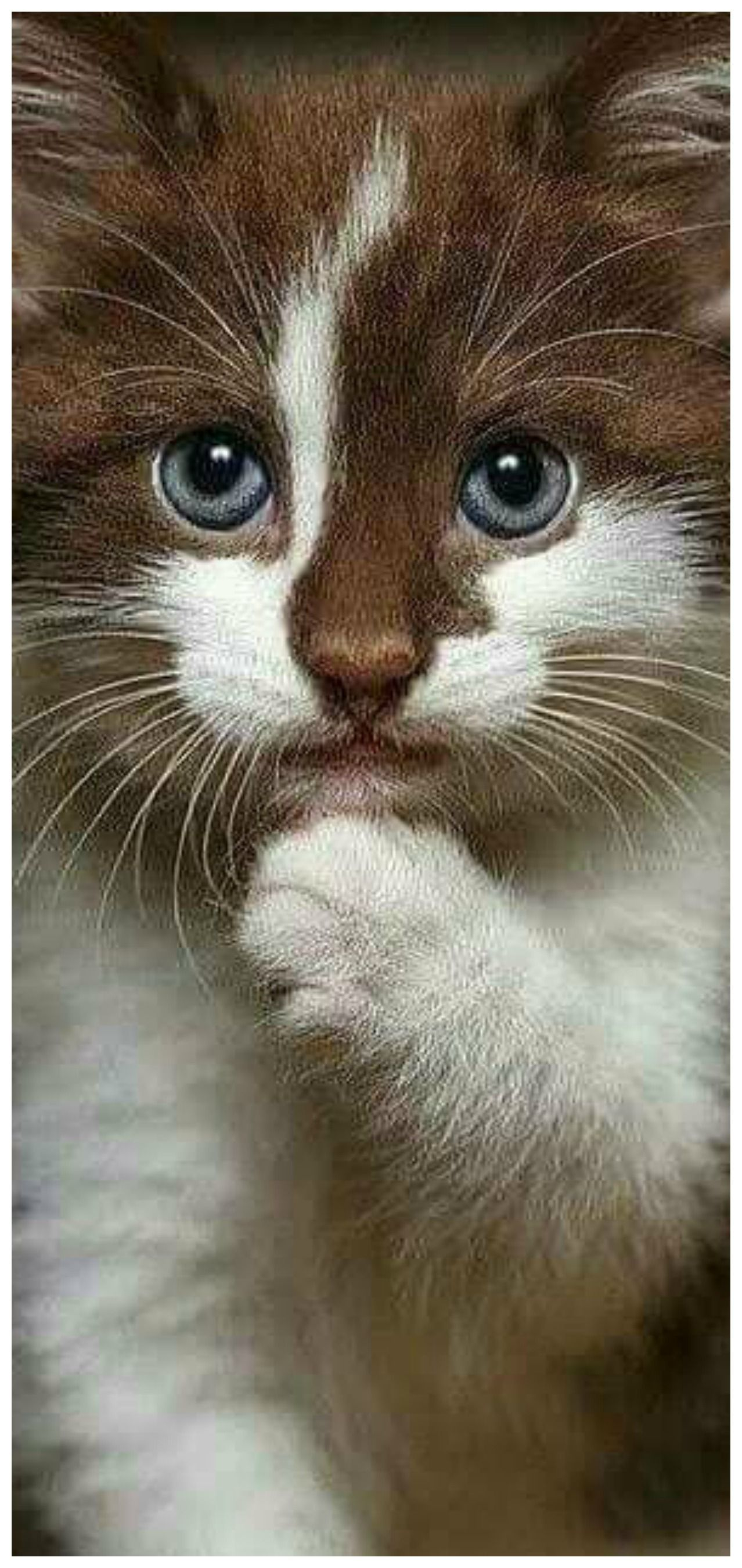 Pin by Antonia Pereira on Cats Pretty cats, Cute cats