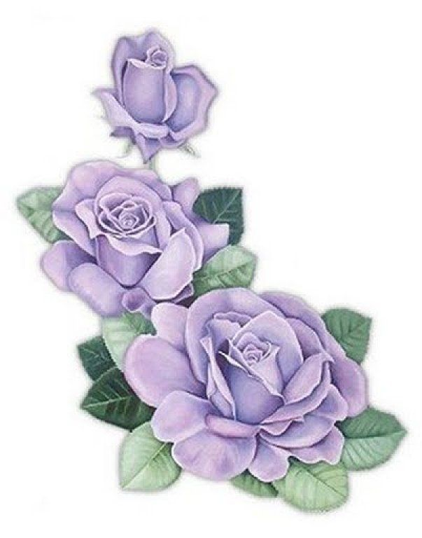 Image result for light purple roses drawing