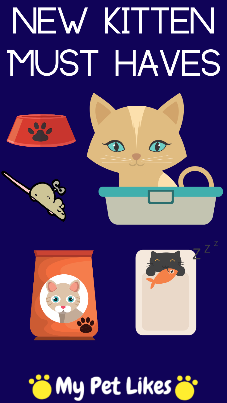 10 Must Have Products When Your Bring Home That New Kitten Kitten Cats Cat Grooming