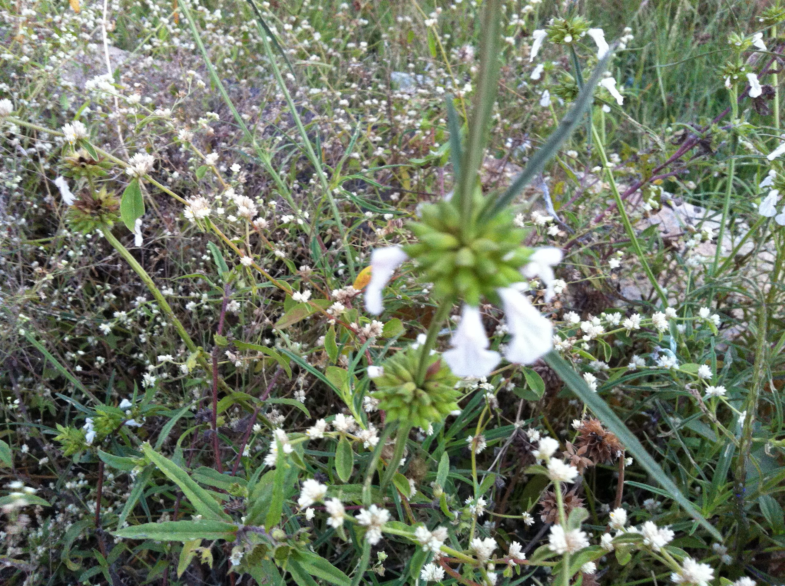Herbal beauty Flower quotes, Herbalism
