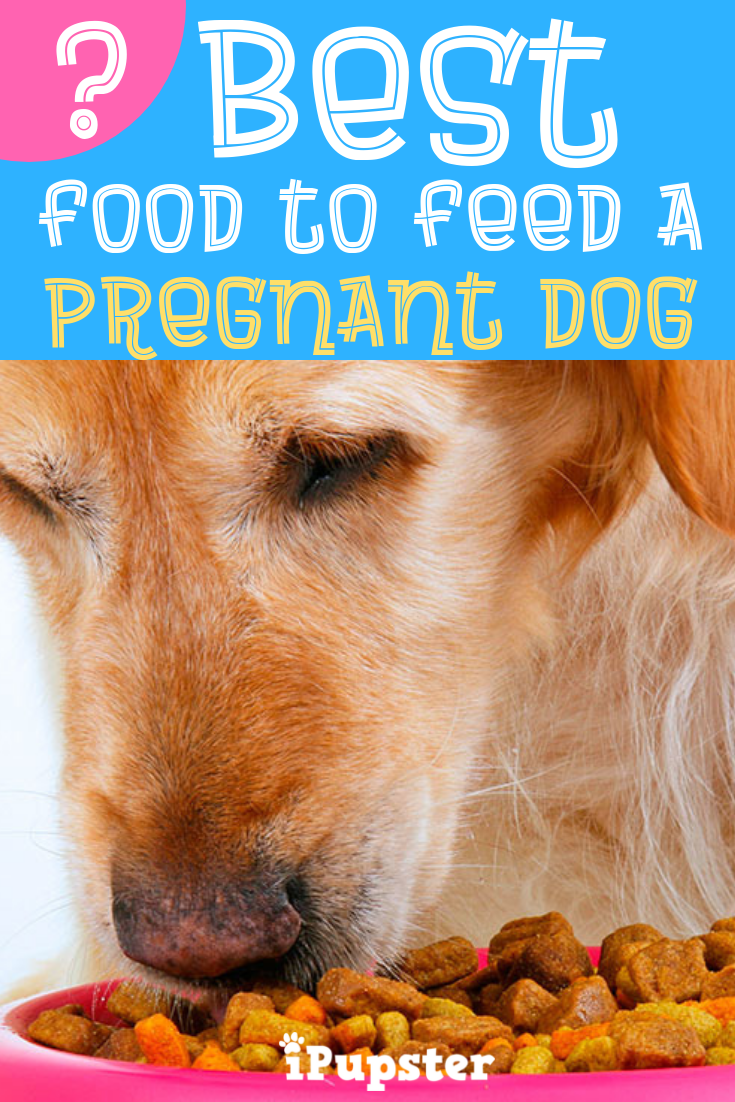 Best Dog Food for Pregnant Dogs – TOP 6
