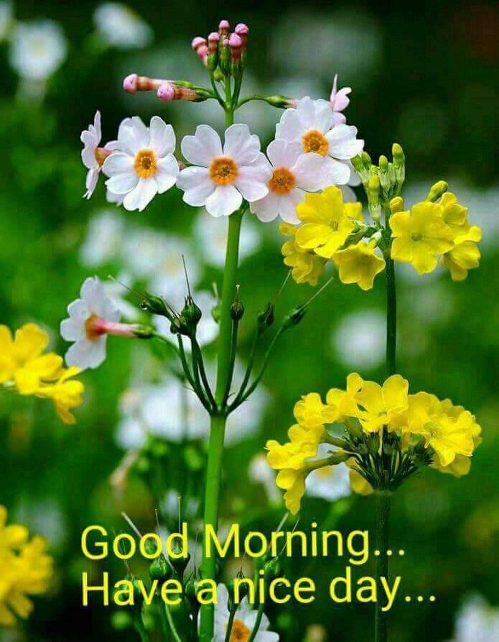 Manohar Upadhyay Google Pinterest Google Morning