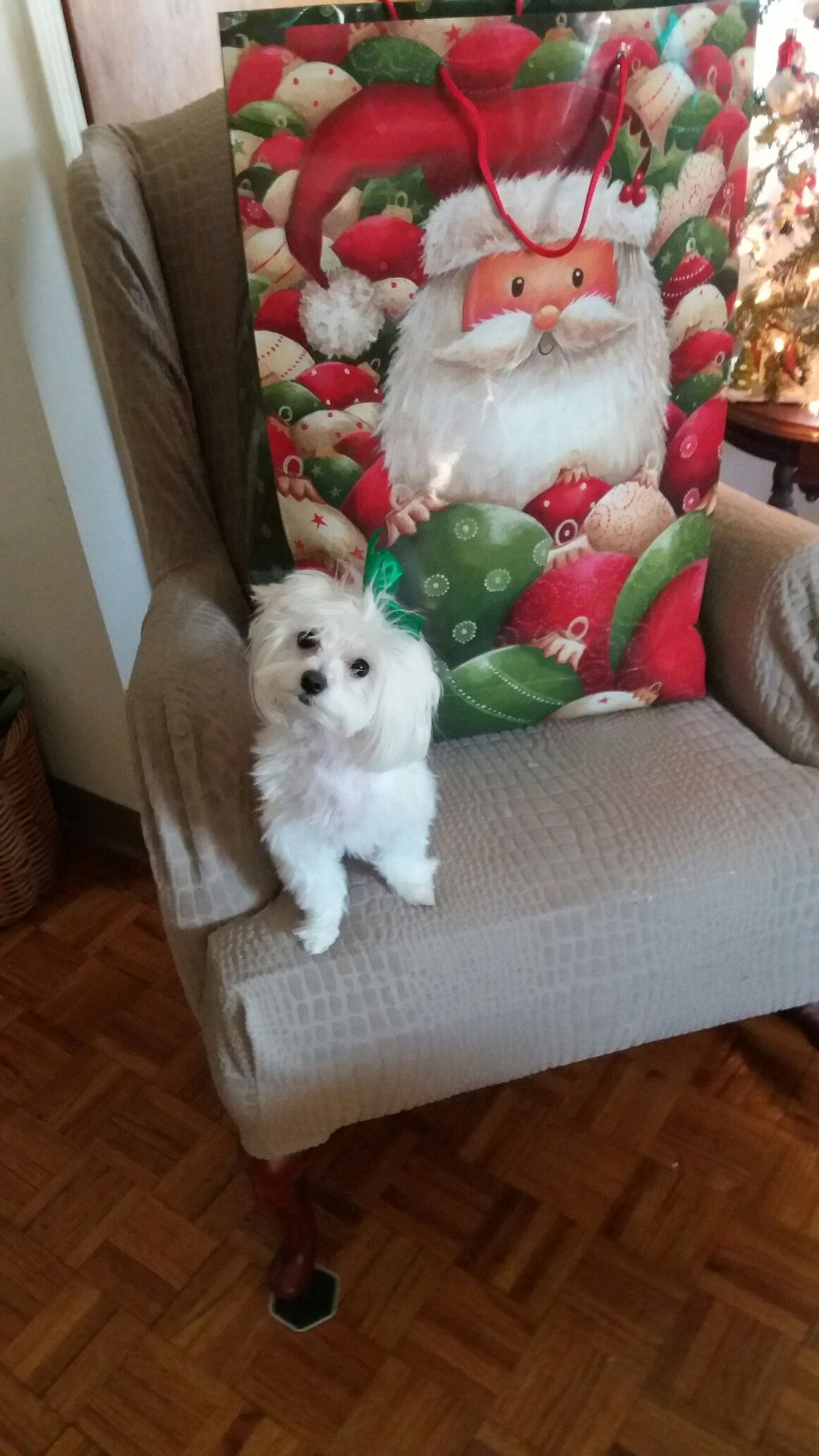 Come on Mummy, let me so what Santa brought me!!!!!!