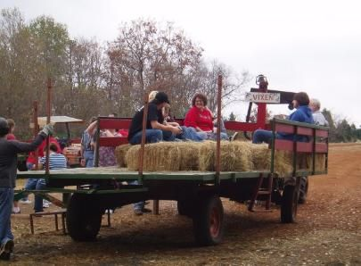 All tree buying customers go pick out their tree on a complimentary hay ride!