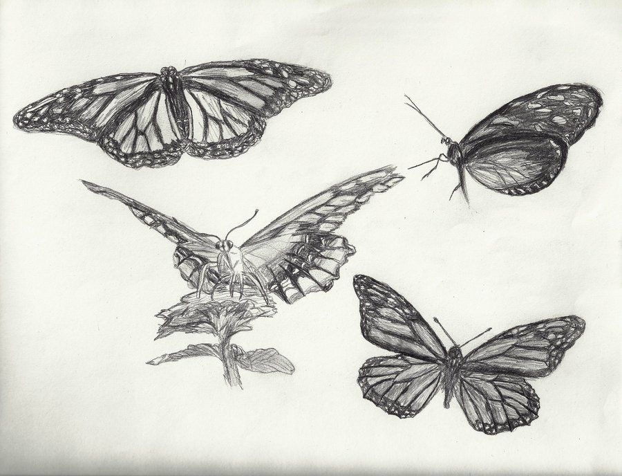Butterfly Drawing Tumblr Google Search Art Drawings