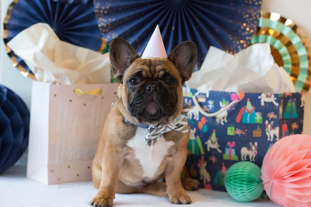 Yay Celebrate French Bulldog Puppy Birthday Party Puppy
