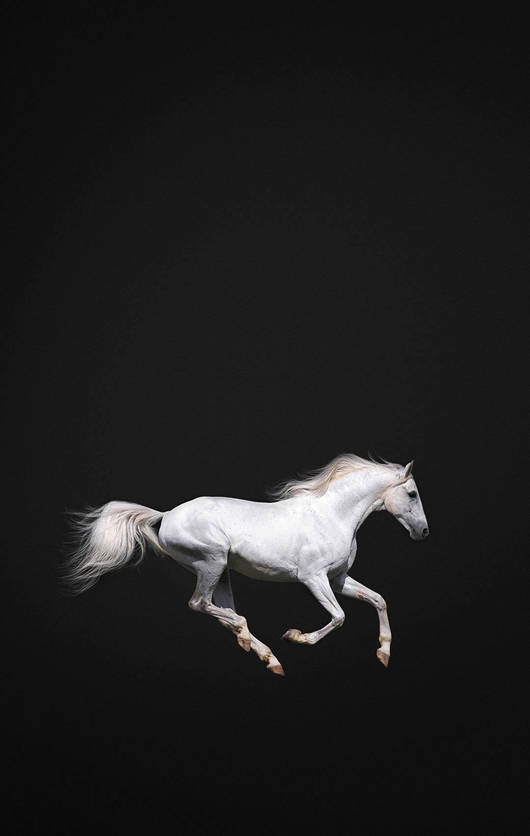 Good Wallpaper Horse Iphone 5s - c44178e7ba4a8802e553eecd4cacbe41  Graphic_604444.jpg