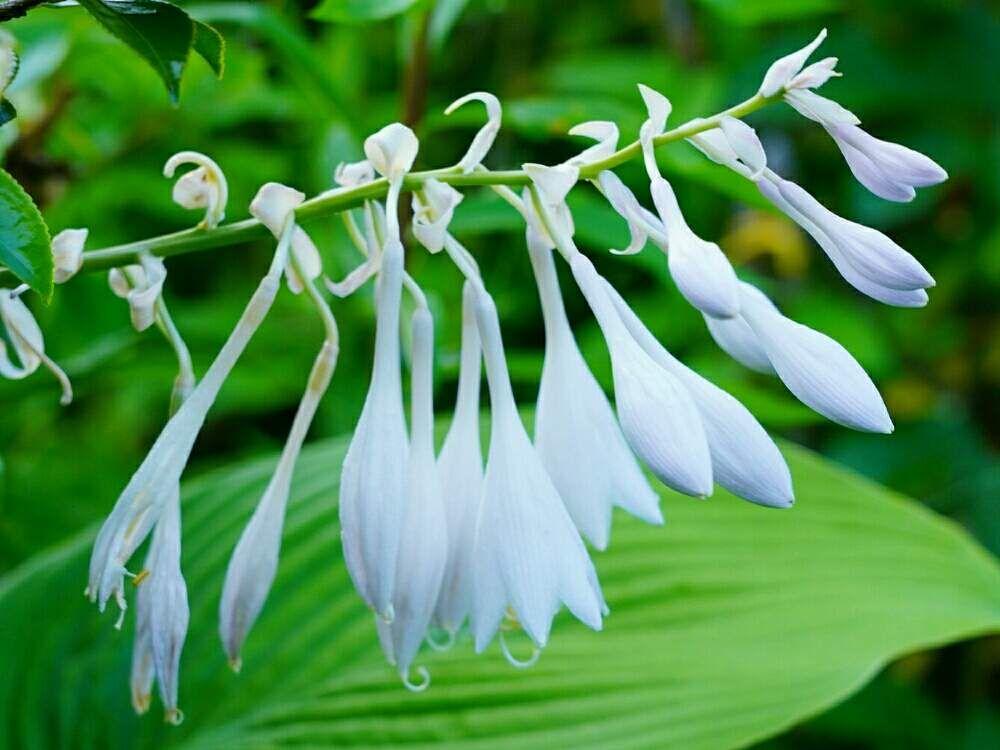 ボード Dailygreensnap 2020 06 09 オススメの植物 花の写真 のピン