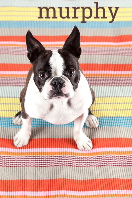 Vote for your favorite dog models from Gracious Home and Hudson!