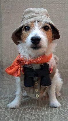 safari dog on adventure halloween costume