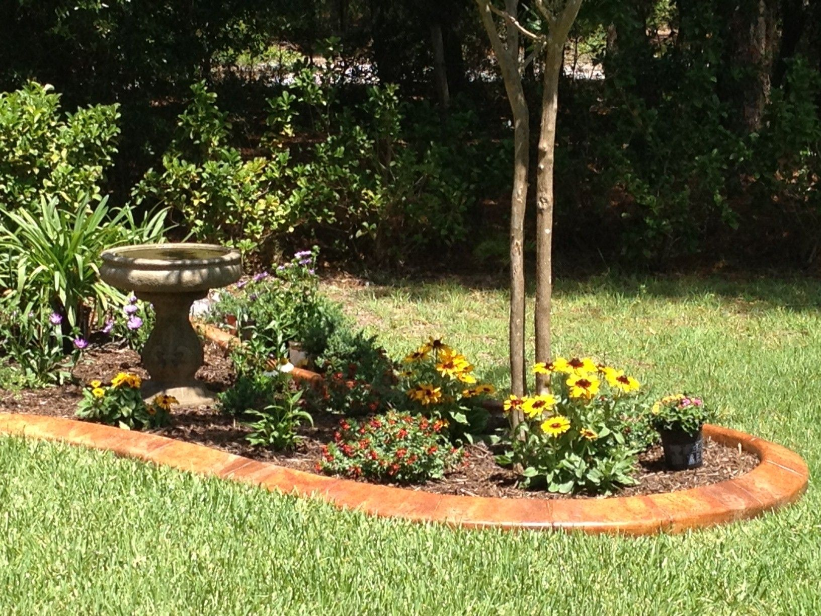 My Butterfly And Hummingbird Garden In Florida