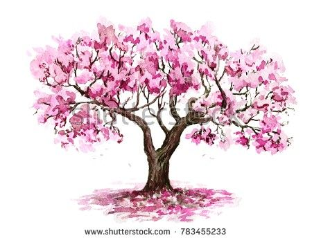 Stock Photo The Sakura Tree Hand Drawn Watercolor Sketch 783455233 Sketches Of Cherry Blossom Cherry Blossom Art Cherry Blossom Tree Tattoo Sakura Tree