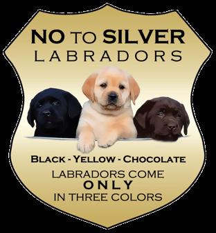 Spirithawk Welcome Black Lab Puppies English Lab Puppies Labrador