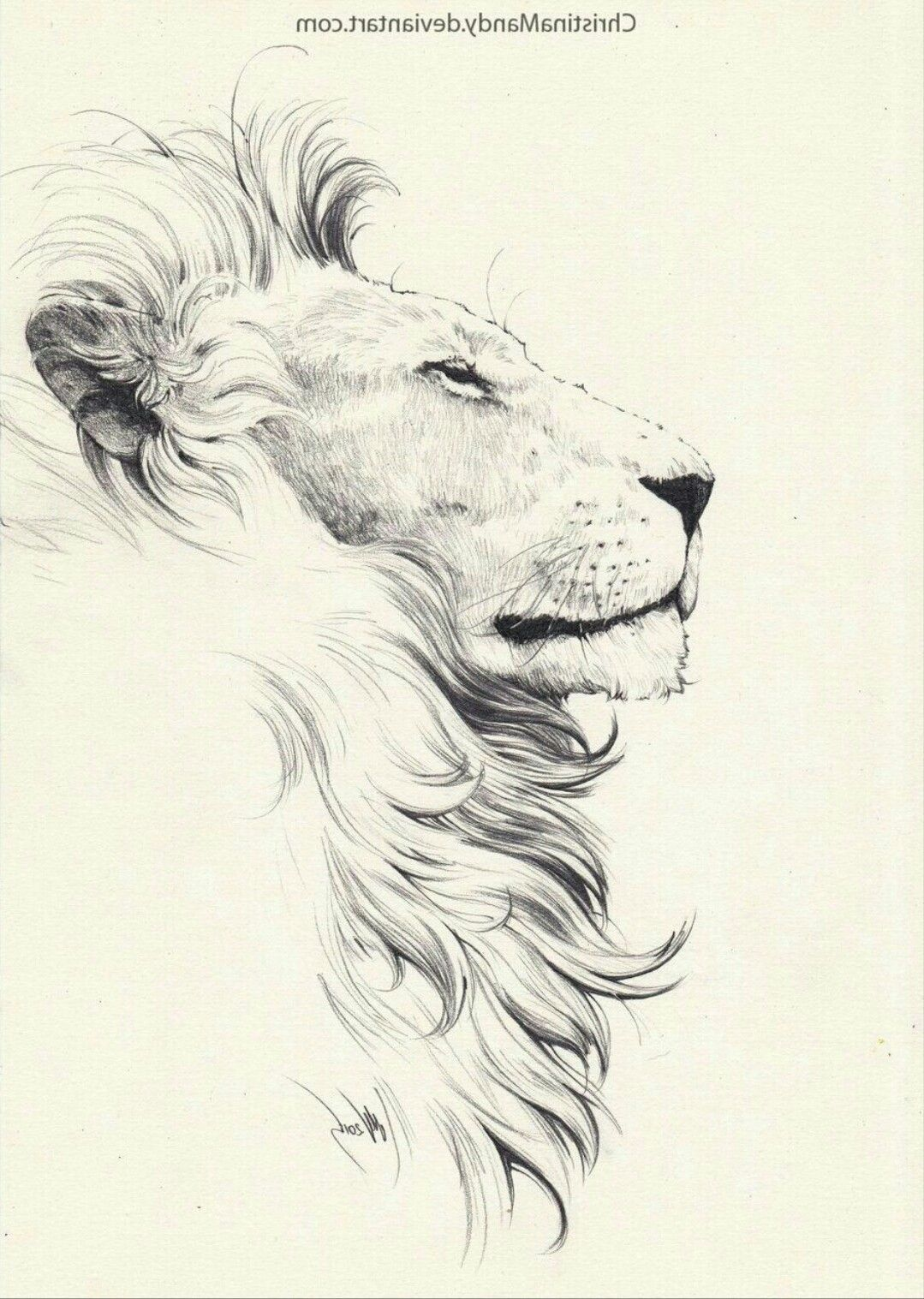 Hhhh Drawing Eyler Paper Pencil Lion Sketch Lion Drawing Lion Tattoo