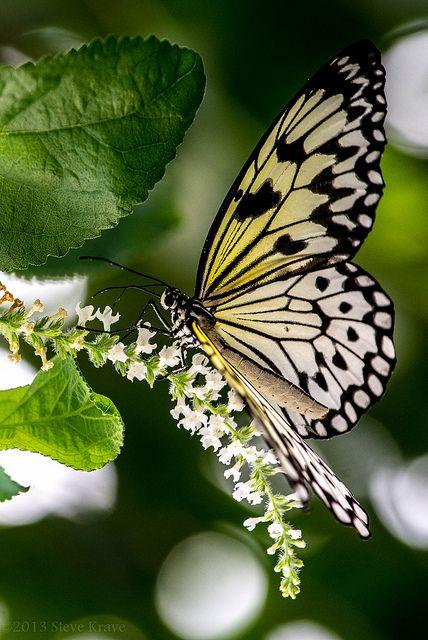Occupied 6 Schone Welt Fauna Flora Libellen Nachtfalter Und Falter