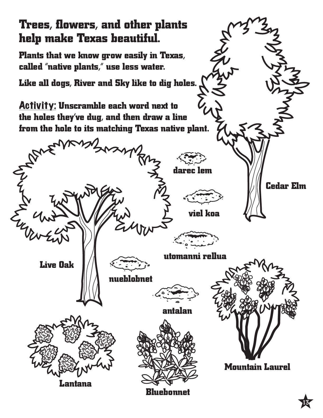Texas Native Plant Activity and Coloring Page for Kids #