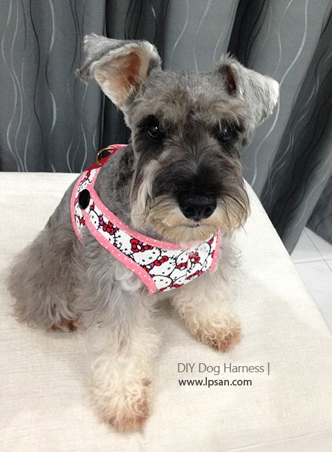 How To Make A Dog Harness All About D I Y Sharing In 2020 With