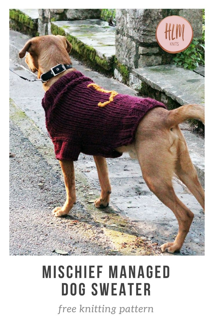 The Mischief Managed Dog Sweater - Free Knitting Pattern | Knit ...