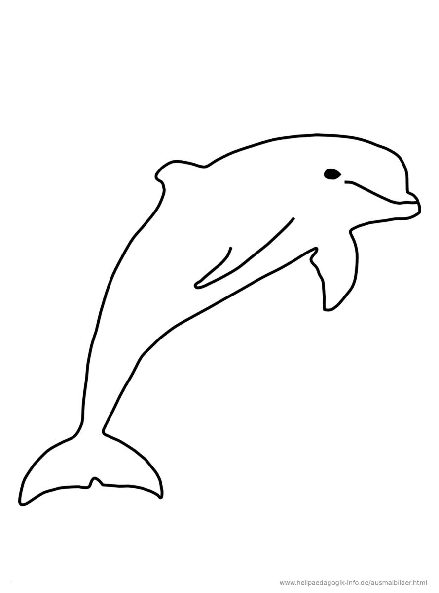 Delfin Malvorlage Ausmalen Bilder Zum Ausmalen Ausmalbilder