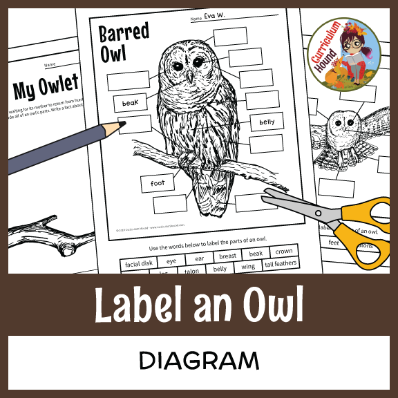 Label An Owl Diagram - Parts Of An Owl Labeling