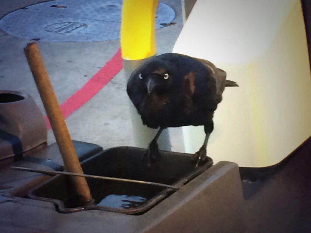 #crow #servicestation #customer