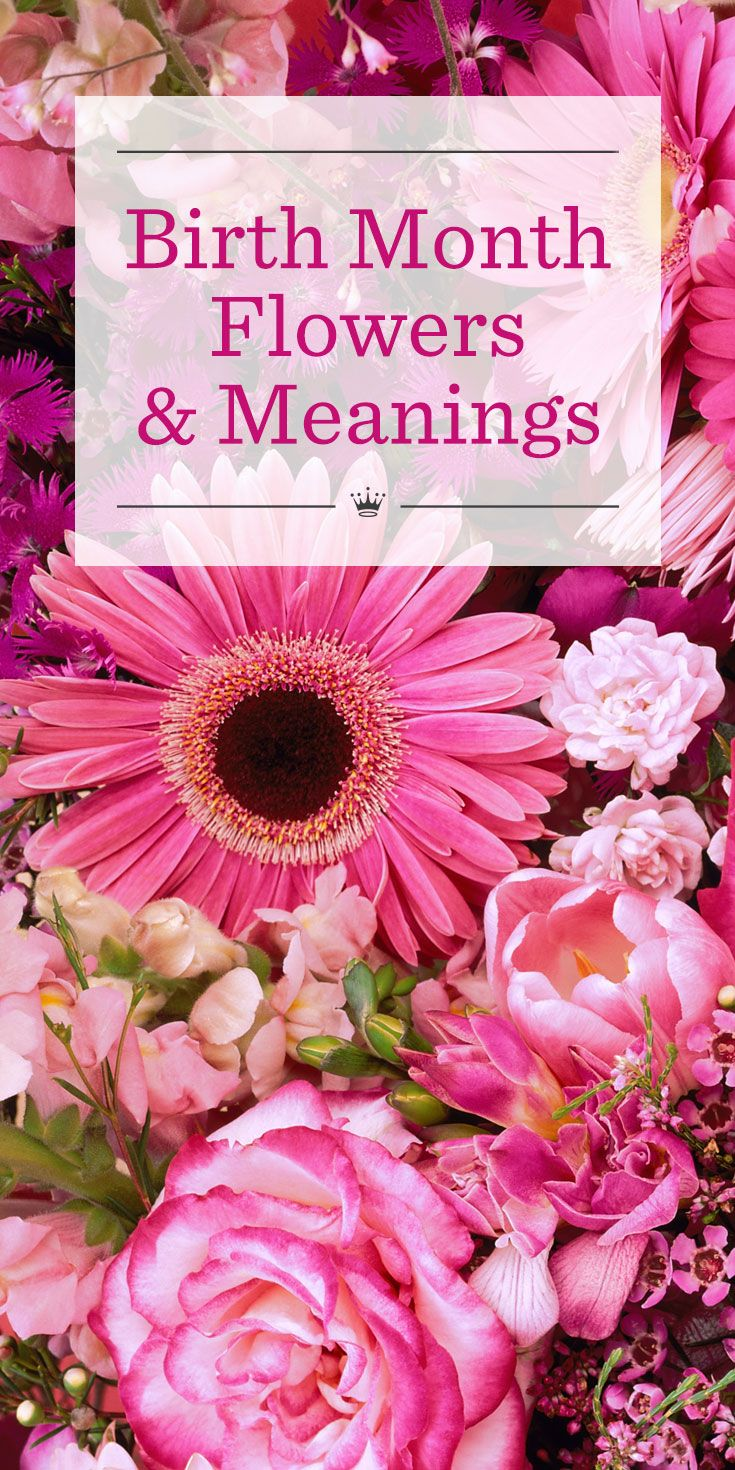 Birth flowers & meanings Birth month flowers, Month