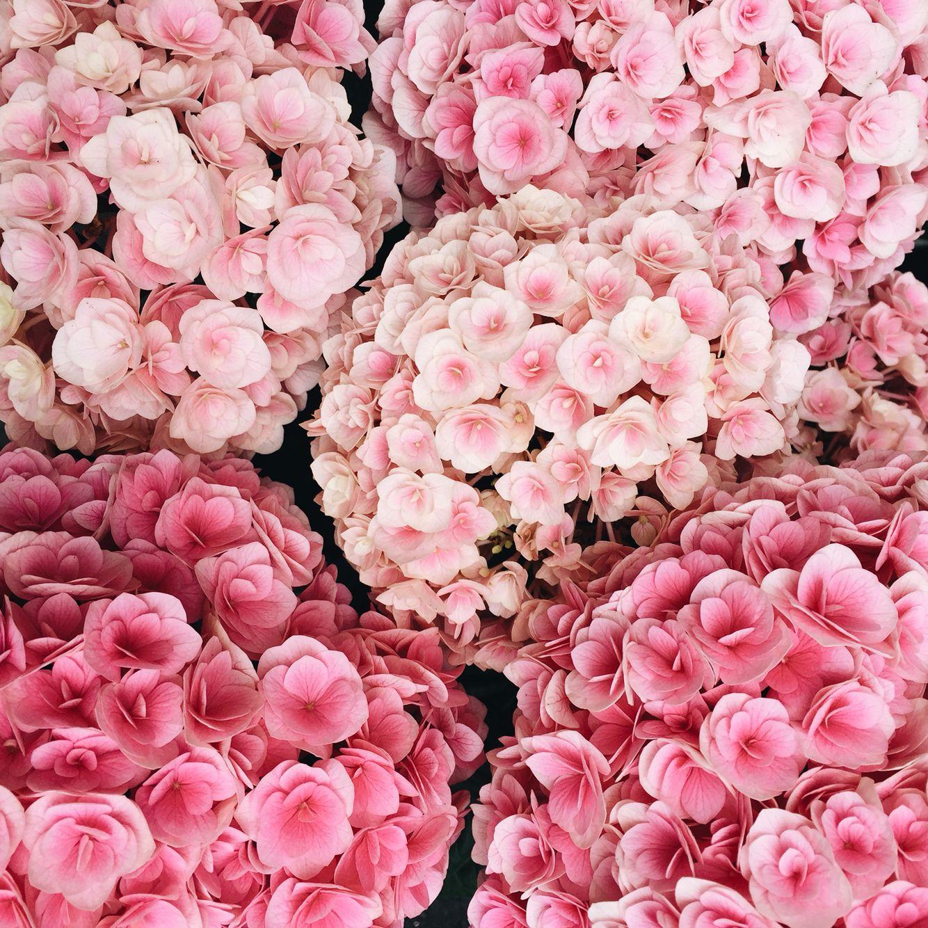 Картинки на имена цветы