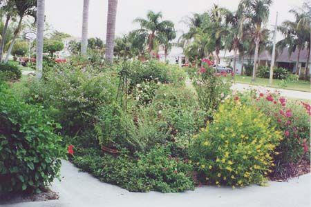 Nice A Small South Florida Garden   Introduction
