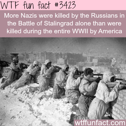 WTF Facts : funny, interesting & weird facts | Random | Pinterest ...