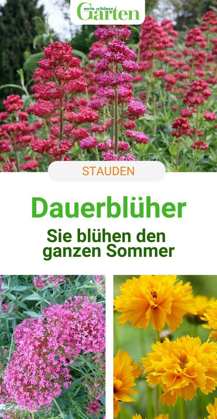 Photo of Die besten Dauerblüher für endlos schöne Staudenbeete