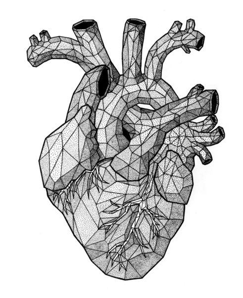 Anatomical Heart Google Search Ink Dibujos De Corazones