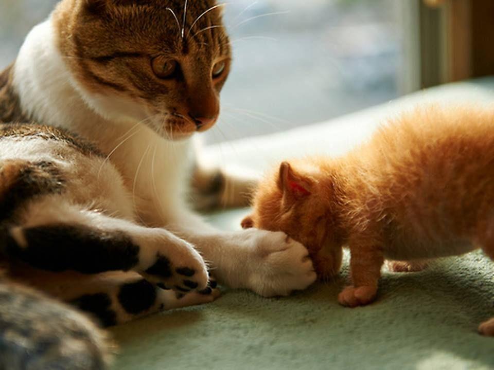 Pet me mom...