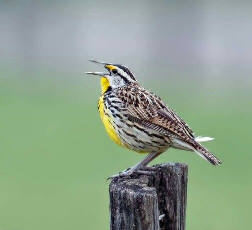 Couple of bird photos from a trip to Cades Cove on Sunday
