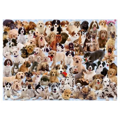 Ravensburger Dogs Galore Puzzle 1000pc Dog Jigsaw Puzzles Ravensburger Puzzle Jigsaw Puzzles